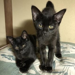 黒子猫♥ミルクくん