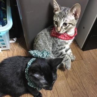 生後四ヵ月‼仲良し兄妹猫ちゃん