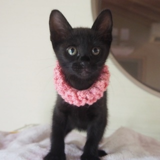 小柄黒猫「リン」ちゃん♡