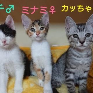 かわいい三兄弟