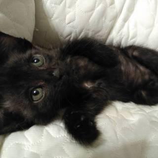 グレーと黒猫の兄妹動画あり