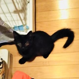 ふわ毛のキュートな黒猫兄妹
