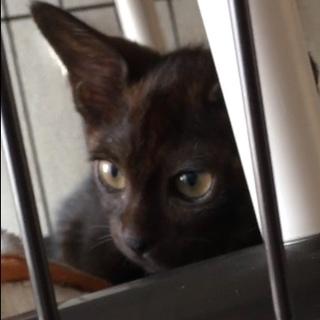ちょっとビビりな生後3ヶ月黒猫の女の子