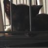 ちょっとビビりな生後3ヶ月黒猫の女の子 サムネイル3