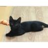 頭の良い黒ネコちゃんの里親を募集しています