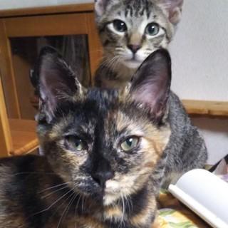サビ猫カコちゃん、3ヶ月半