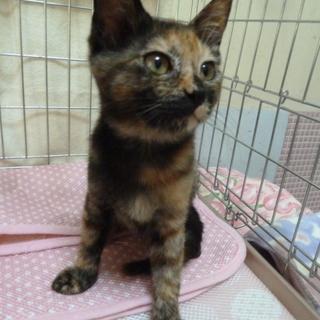 小さなサビ猫さん、甘えん坊です