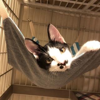 【高齢者歓迎】甘えん坊の子猫ペア