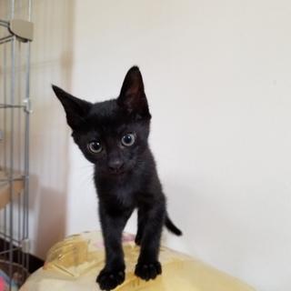 黒猫のにゃんこ