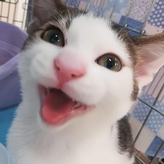 【品川発】初心者向きの甘えん坊兄弟子猫