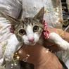 美人な三毛猫☆ノエルちゃん 4ケ月 サムネイル3