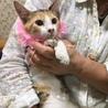 キジ三毛の可愛い女の子☆チャーミーちゃん 4ケ月 サムネイル3