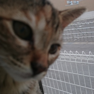 子猫の里親さん、探しています。