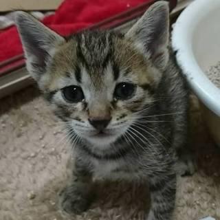 可愛い可愛い子猫ちゃん