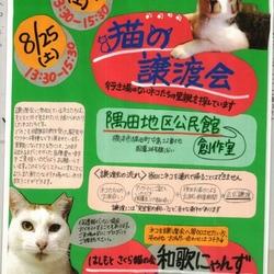 猫の譲渡会in橋本市♡はしもとさくら猫の会和歌にゃんず