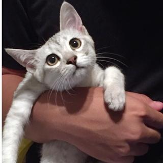 グレー美猫うゆにちゃん♡