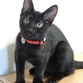 ツヤツヤ!毛ヅヤのいい黒猫くん