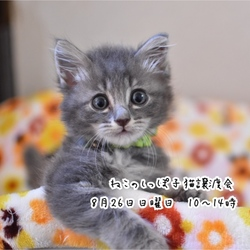 ねこのしっぽ子猫譲渡会