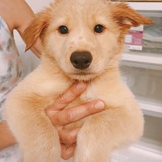 2ヶ月半子犬