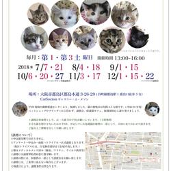 *子猫〜大人猫のネコ譲渡会* サムネイル3