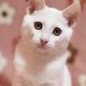 人慣れバツグン☆白猫の想くん