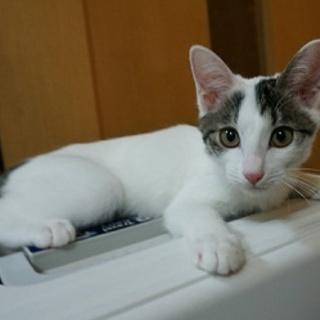 美にゃんの子猫♪キャロル