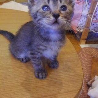 片目 つぶる 猫