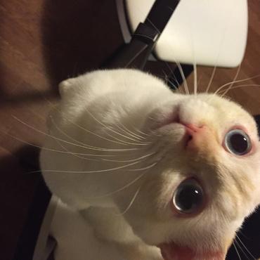 ちょ〜だい