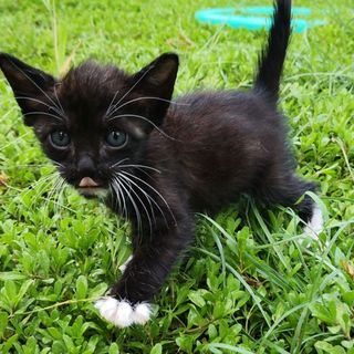 3~4週齢捨て猫7匹保護  その1・黒白