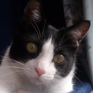 超美猫!死の淵から生還(厳し過ぎる要求無し)