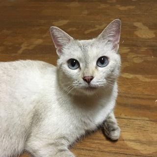 人懐っこいまん丸おめめの美人猫さん