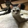 人懐っこいまん丸おめめの美人猫さん サムネイル3