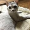 人懐っこいまん丸おめめの美人猫さん サムネイル2