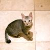 ぬいぐるみ猫♡ネアン4ヶ月ベンガル風キジトラ サムネイル3