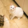 ぬいぐるみ猫♡ネアン4ヶ月ベンガル風キジトラ サムネイル4