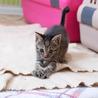 ぬいぐるみ猫♡ネアン4ヶ月ベンガル風キジトラ サムネイル7
