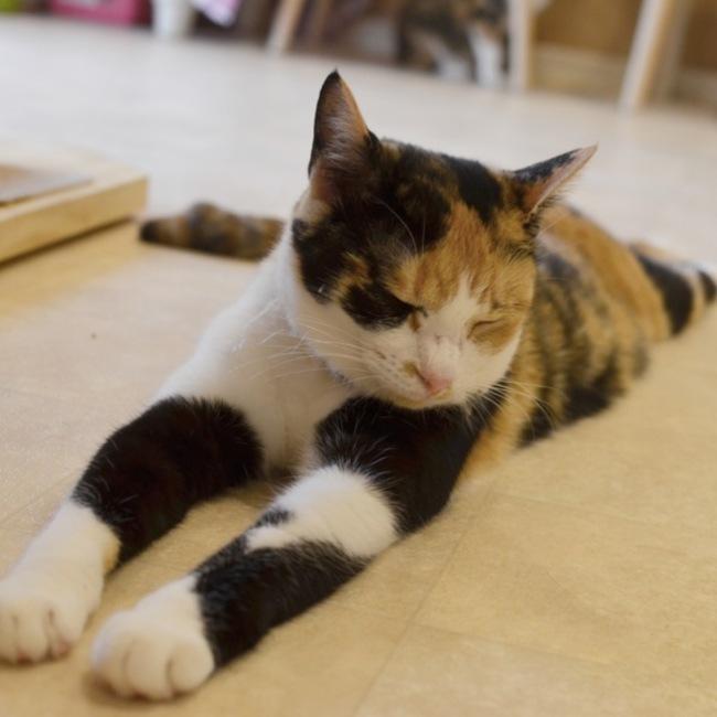 NPO法人Happy-Wildcatsのカバー写真