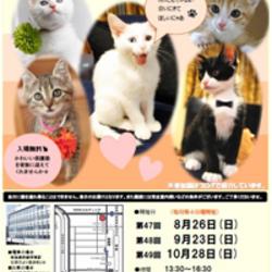 cat on fleek in 堺市