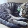 ジュマ猫(保護活動者)
