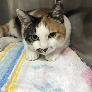 福島で7年間生き延びた被災猫「ミケマリア」ちゃん