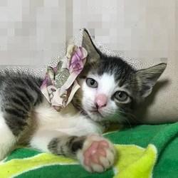 ぼく 富士桜 ♪