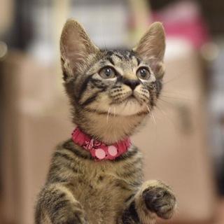 瞳の大きな美猫【風ちゃん】