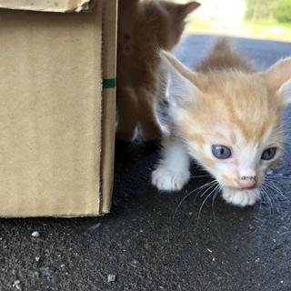 子猫の里親さん募集します!