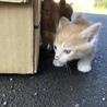 子猫の里親さん募集します! サムネイル4