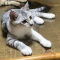 可愛い子猫名古屋から