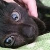 好奇心いっぱい黒子猫!