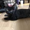 ごろごろの黒猫ちゃん