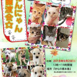 保護っこ犬猫譲渡会★in倉敷