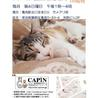 CAPIN ねこ里親会in亀有