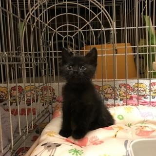 小ちゃな黒猫ちゃん女の子